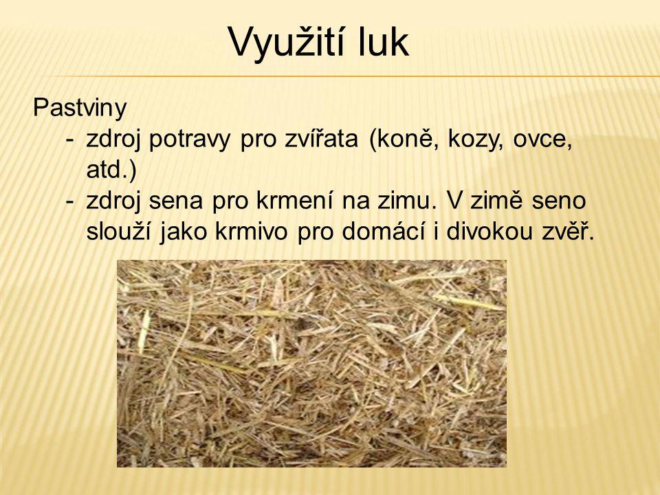 Využití luk Pastviny. zdroj potravy pro zvířata (koně, kozy, ovce, atd.)