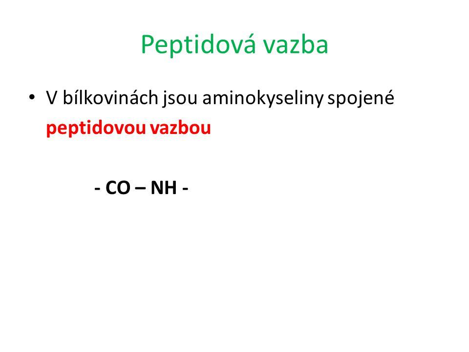 Peptidová vazba V bílkovinách jsou aminokyseliny spojené