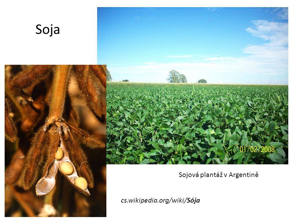 Soja Sojová plantáž v Argentině cs.wikipedia.org/wiki/Sója
