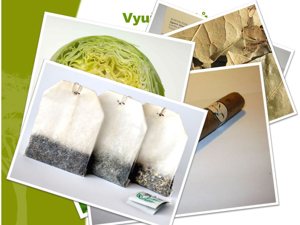 Využití listů Zelenina (ledový salát) Čaj. Koření (bobkový list) Tabák, drogy… Lano.