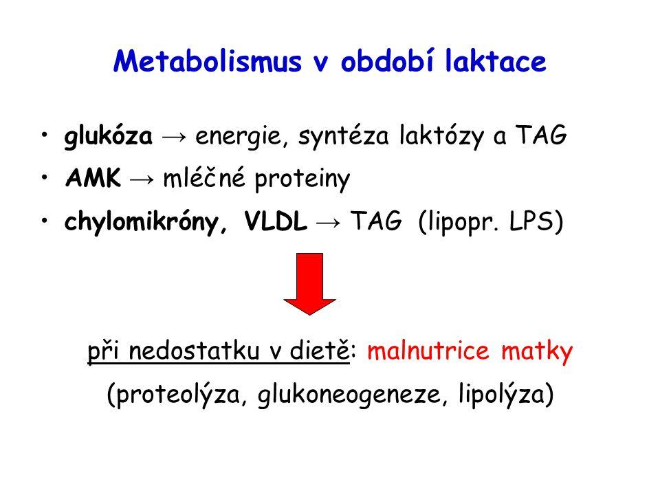 Metabolismus v období laktace