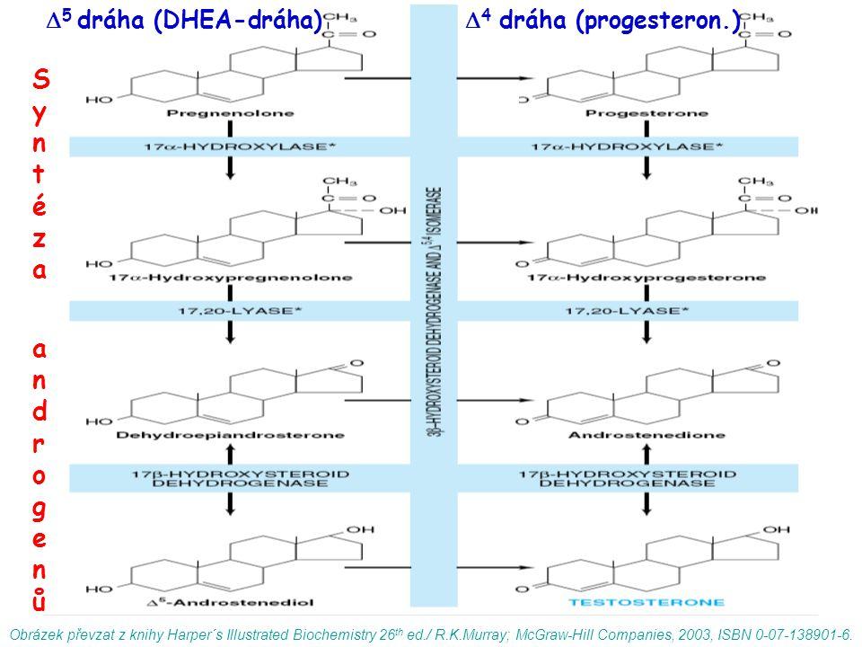 Syntéza androgenů 5 dráha (DHEA-dráha) 4 dráha (progesteron.)