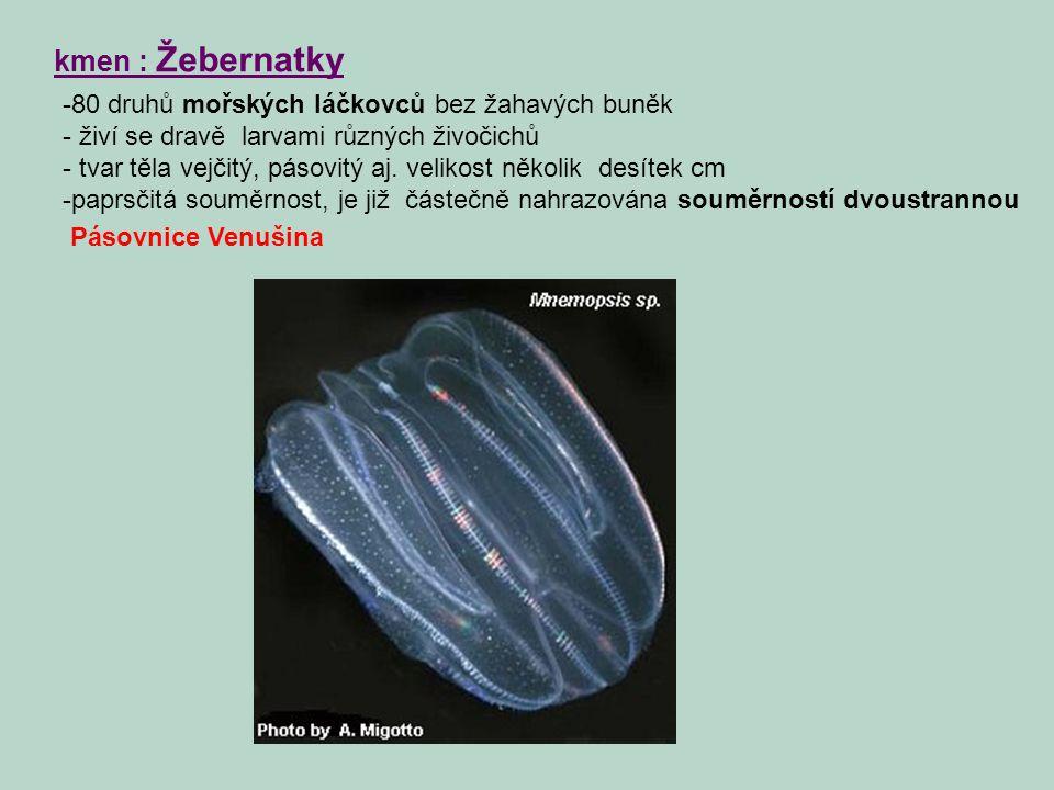 kmen : Žebernatky 80 druhů mořských láčkovců bez žahavých buněk