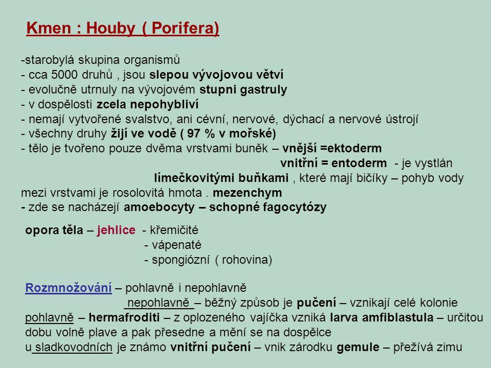 Kmen : Houby ( Porifera)