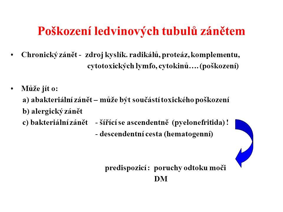 Poškození ledvinových tubulů zánětem