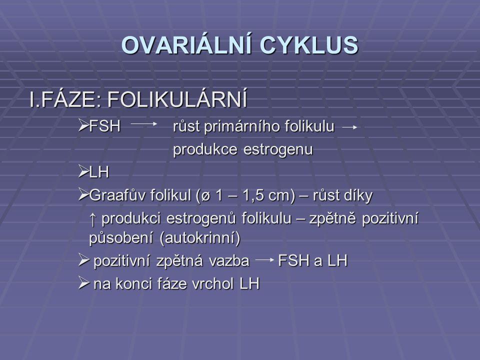 OVARIÁLNÍ CYKLUS I.FÁZE: FOLIKULÁRNÍ FSH růst primárního folikulu