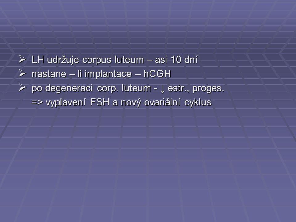 LH udržuje corpus luteum – asi 10 dní