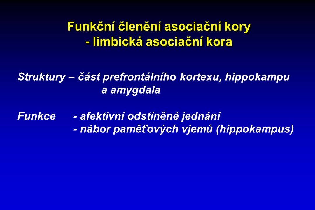 Funkční členění asociační kory - limbická asociační kora