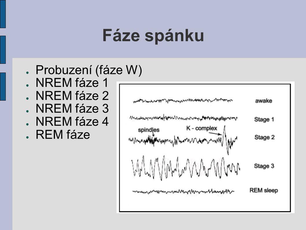 Fáze spánku Probuzení (fáze W) NREM fáze 1 NREM fáze 2 NREM fáze 3