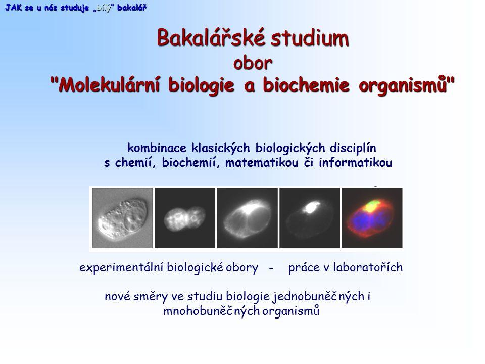 Bakalářské studium obor Molekulární biologie a biochemie organismů