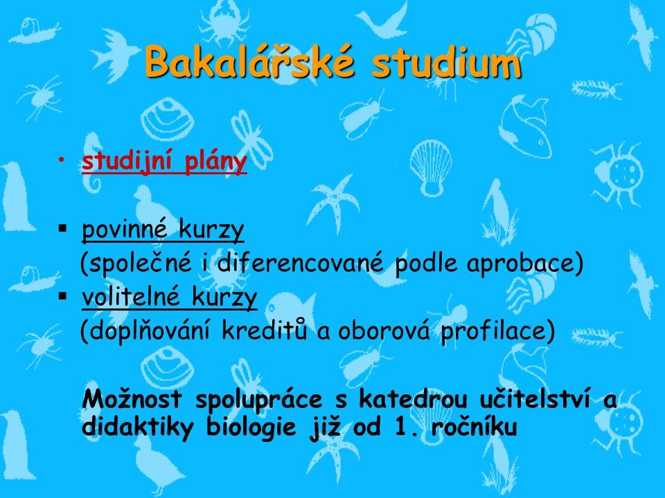 Bakalářské studium studijní plány povinné kurzy