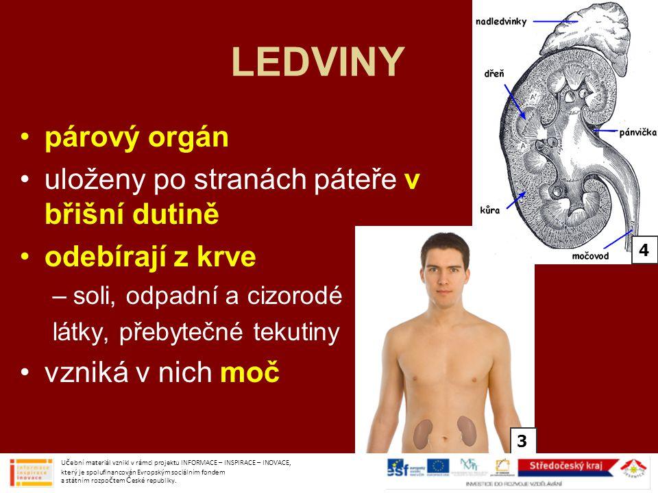 LEDVINY párový orgán uloženy po stranách páteře v břišní dutině