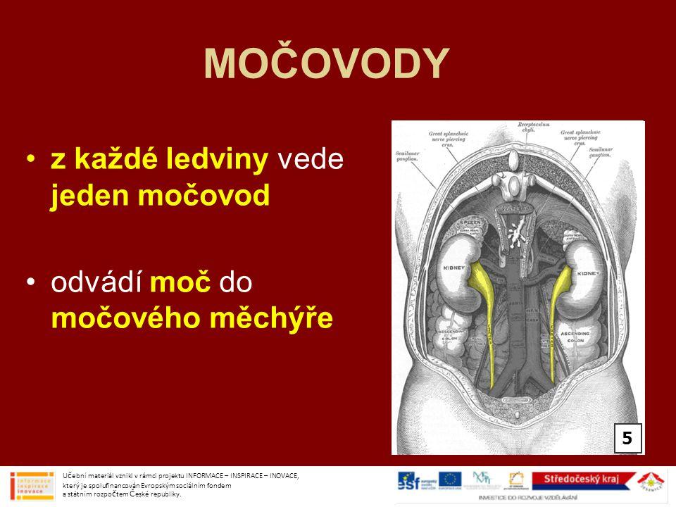MOČOVODY z každé ledviny vede jeden močovod