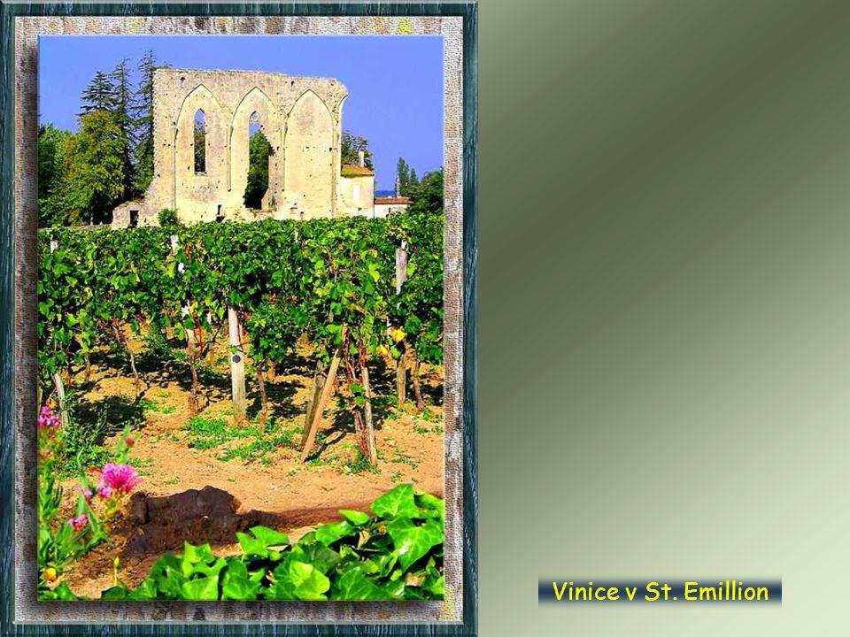 Vinice v St. Emillion