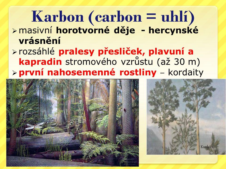 Karbon (carbon = uhlí) masivní horotvorné děje - hercynské vrásnění