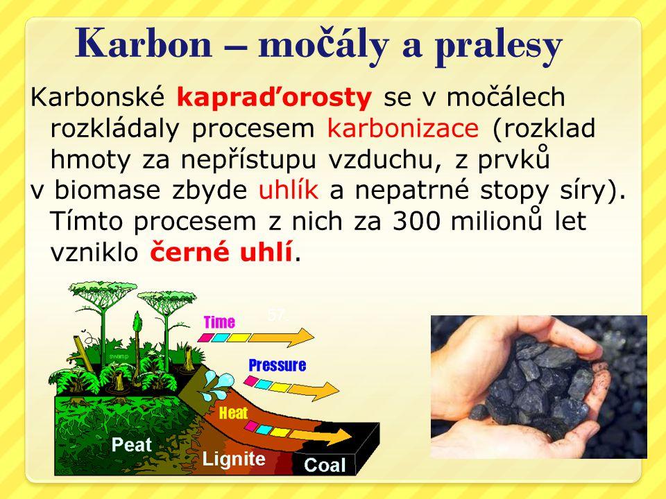 Karbon – močály a pralesy