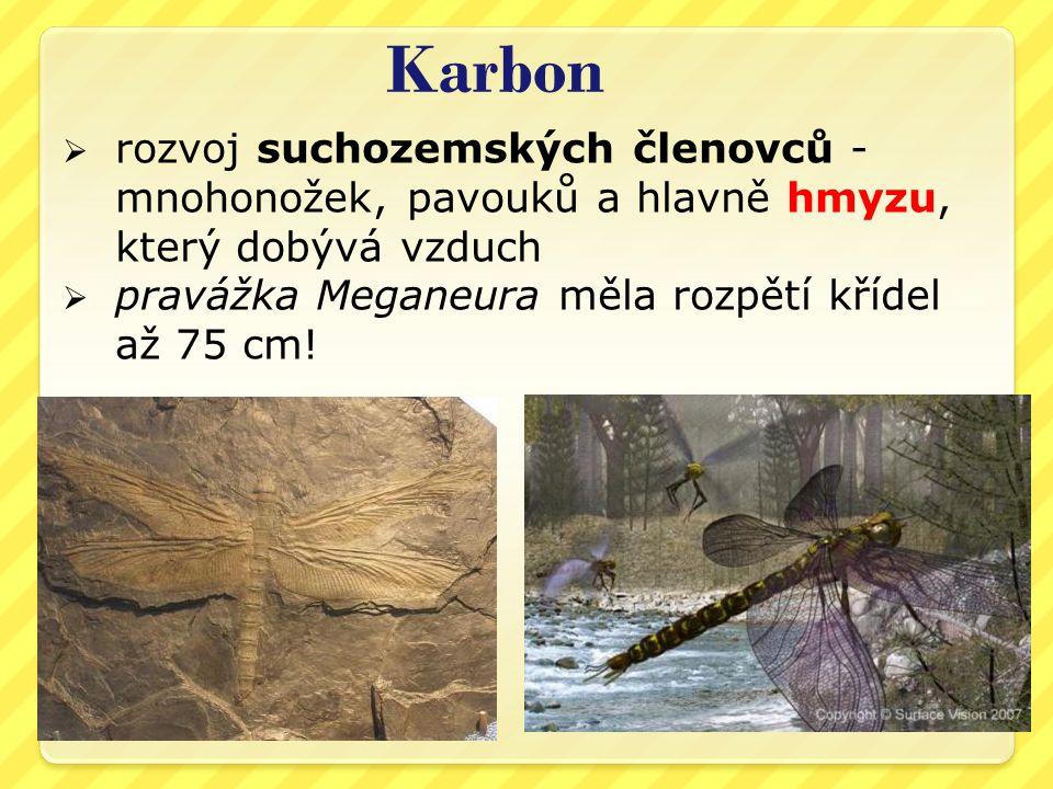 Karbon rozvoj suchozemských členovců - mnohonožek, pavouků a hlavně hmyzu, který dobývá vzduch.