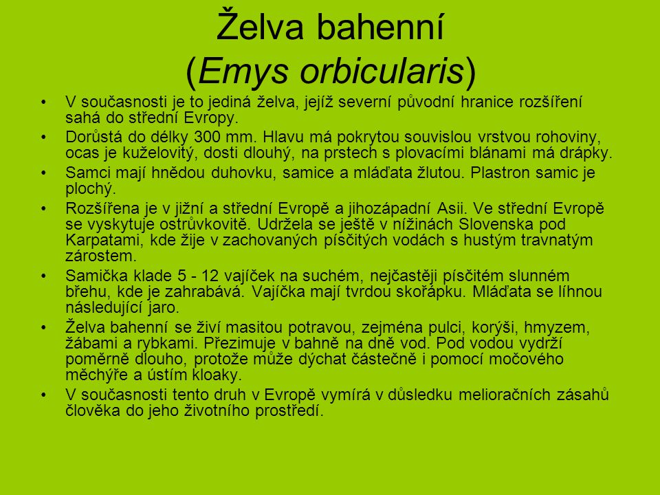 Želva bahenní (Emys orbicularis)