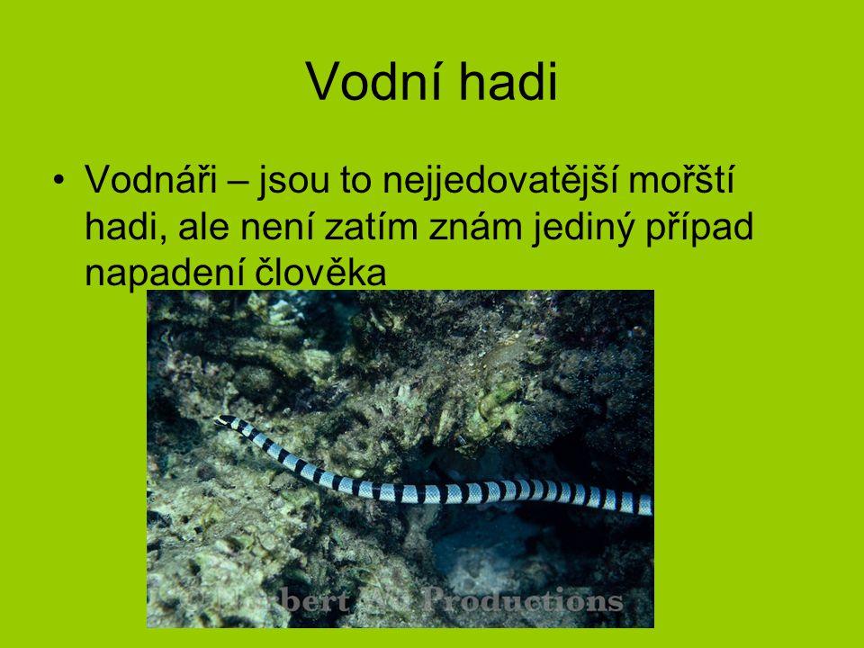 Vodní hadi Vodnáři – jsou to nejjedovatější mořští hadi, ale není zatím znám jediný případ napadení člověka.