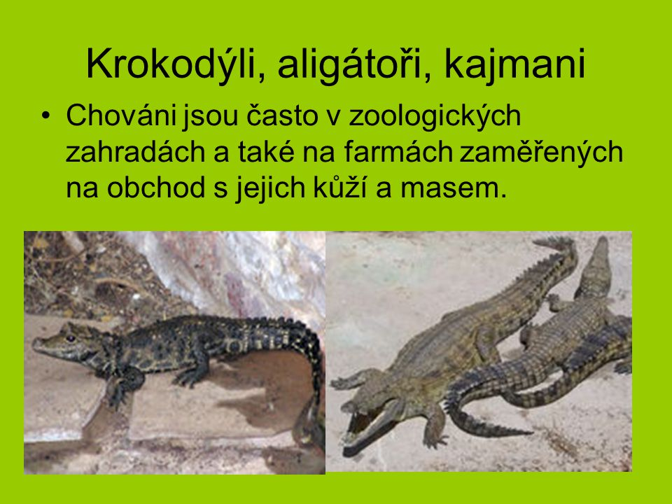 Krokodýli, aligátoři, kajmani