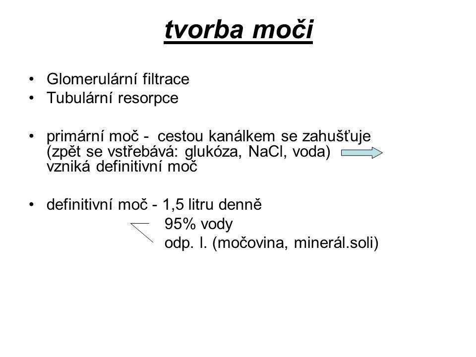 tvorba moči Glomerulární filtrace Tubulární resorpce