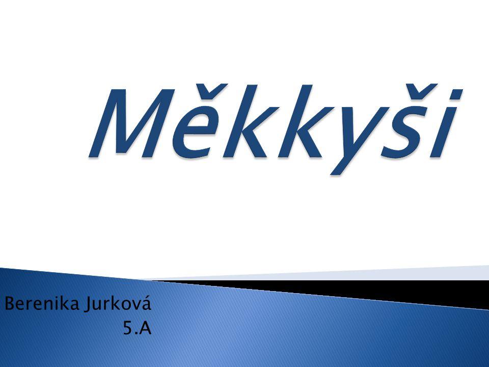 Měkkyši Berenika Jurková 5.A