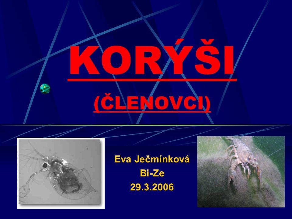 KORÝŠI (ČLENOVCI) Eva Ječmínková Bi-Ze 29.3.2006