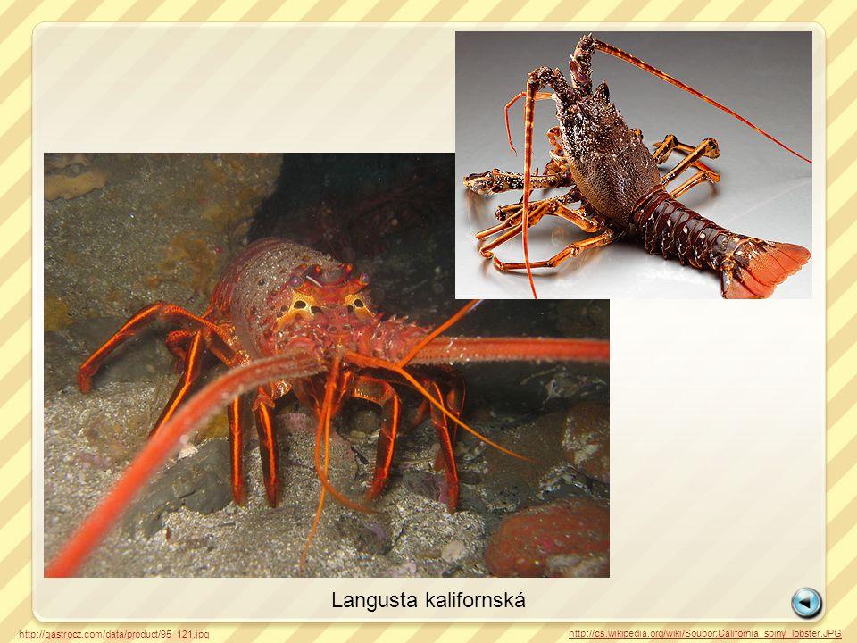 Langusta kalifornská http://gastrocz.com/data/product/95_121.jpg