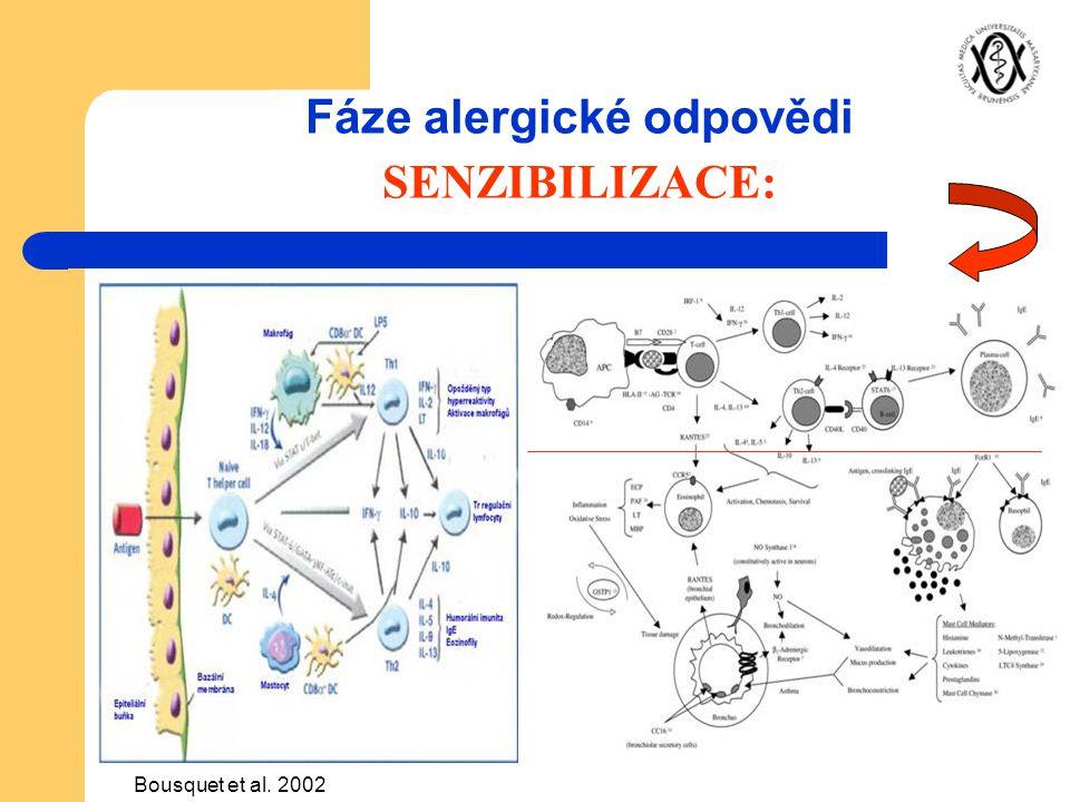 Fáze alergické odpovědi SENZIBILIZACE: