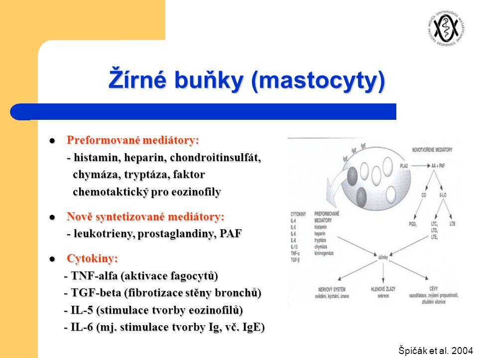 Žírné buňky (mastocyty)