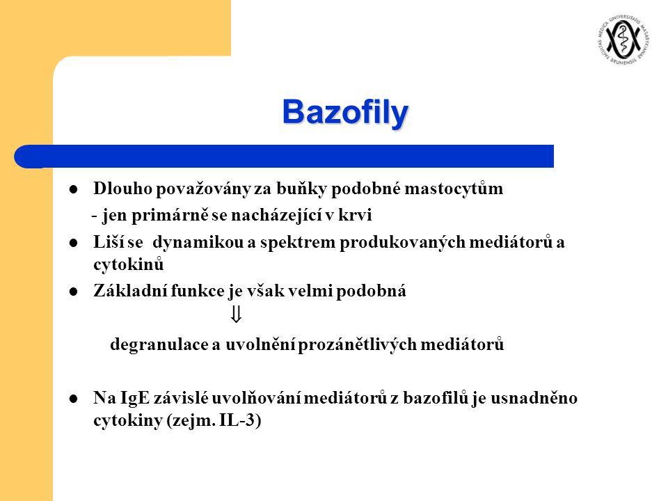 Bazofily Dlouho považovány za buňky podobné mastocytům