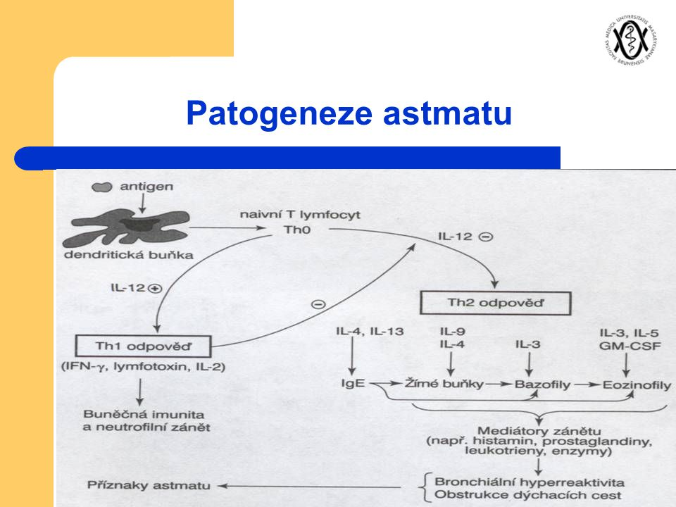 Patogeneze astmatu