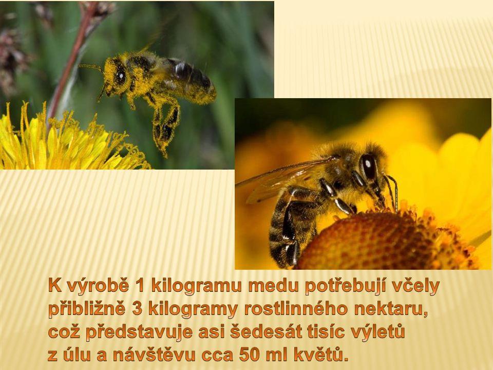 K výrobě 1 kilogramu medu potřebují včely přibližně 3 kilogramy rostlinného nektaru, což představuje asi šedesát tisíc výletů z úlu a návštěvu cca 50 ml květů.