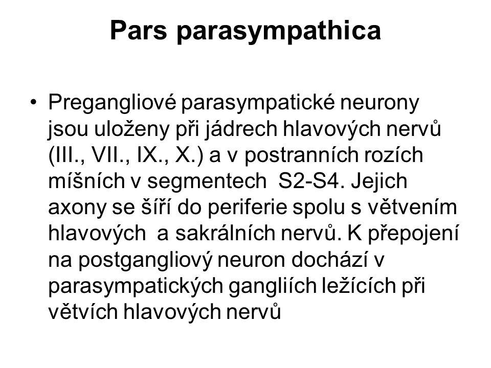 Pars parasympathica