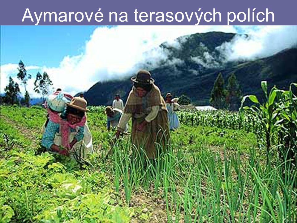 Aymarové na terasových polích