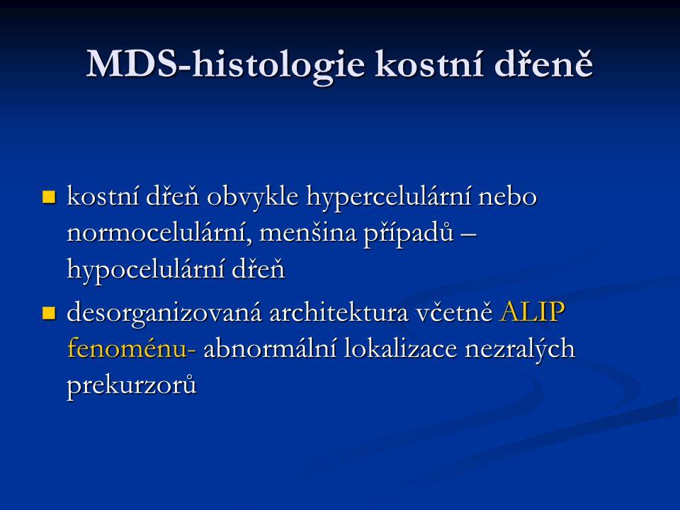 MDS-histologie kostní dřeně