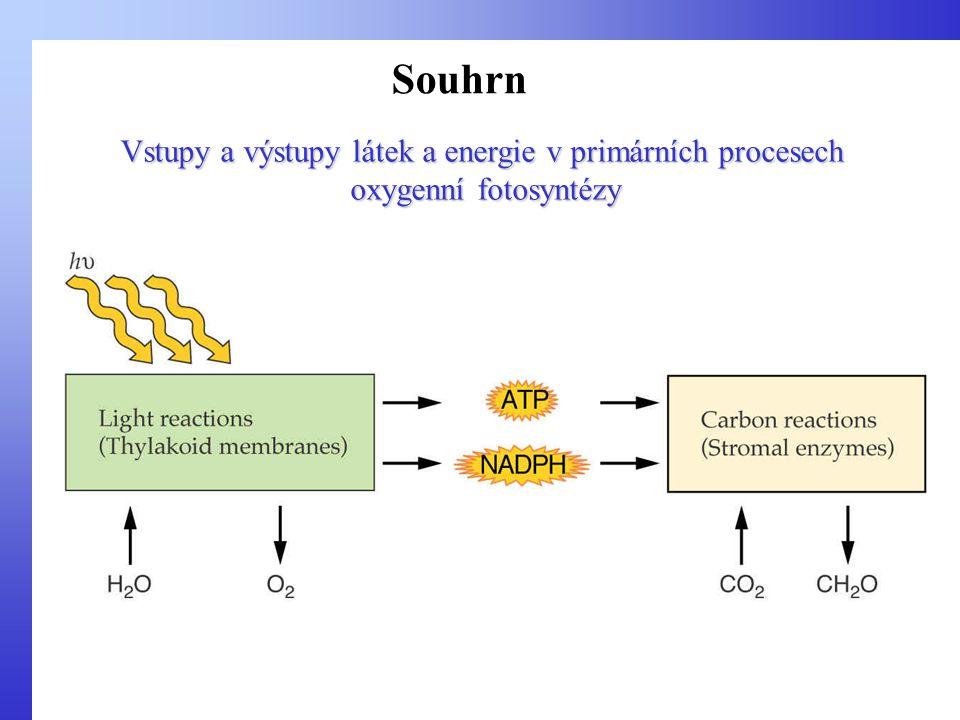 Vstupy a výstupy látek a energie v primárních procesech