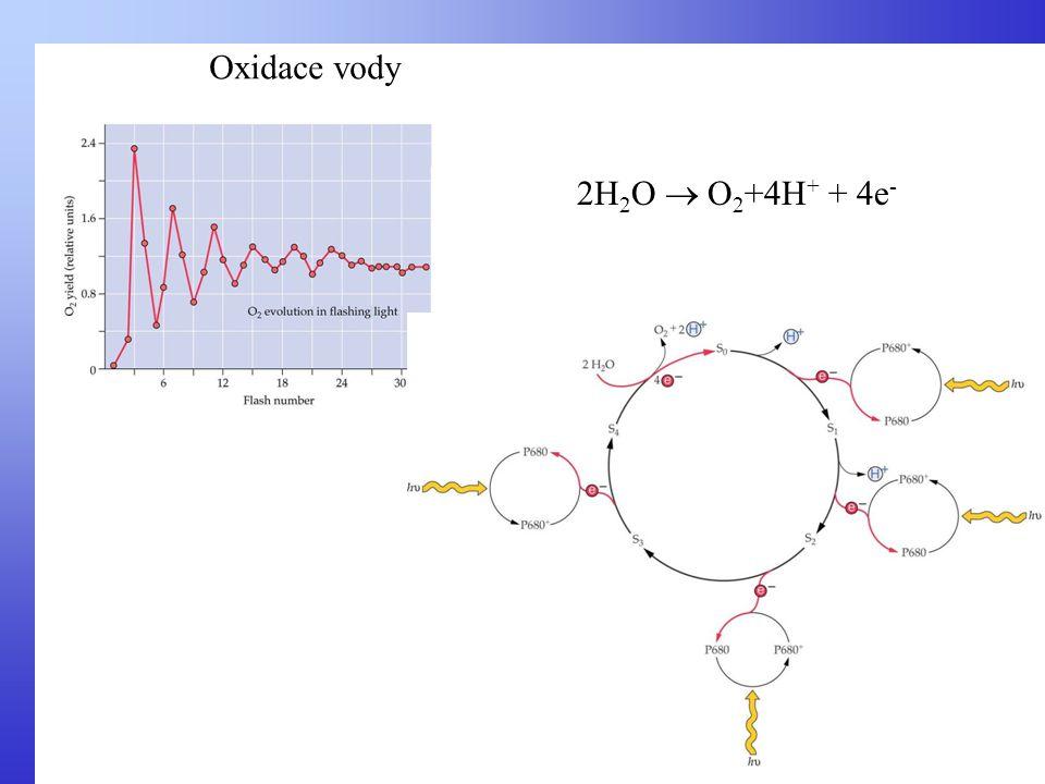 Oxidace vody 2H2O  O2+4H+ + 4e-