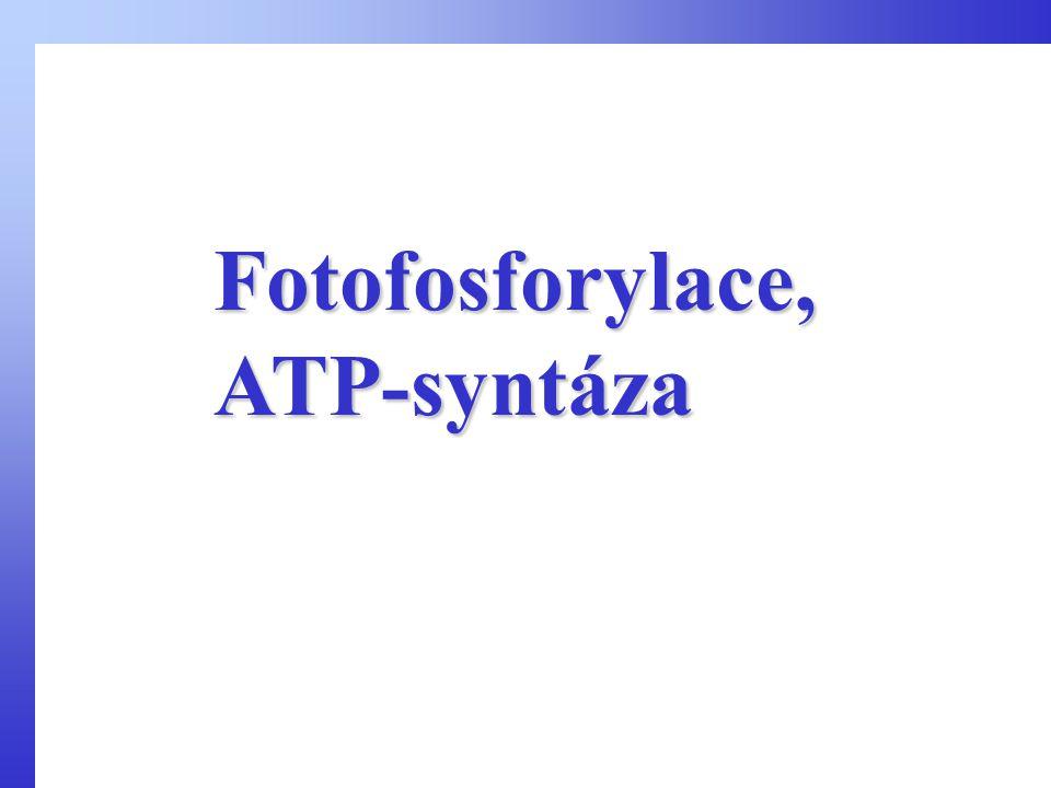 Fotofosforylace, ATP-syntáza