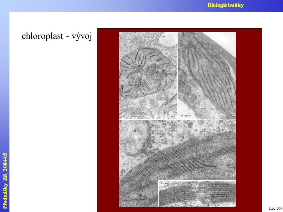 Biologie buňky chloroplast - vývoj Přednášky ZS_2004-05 U,K 109