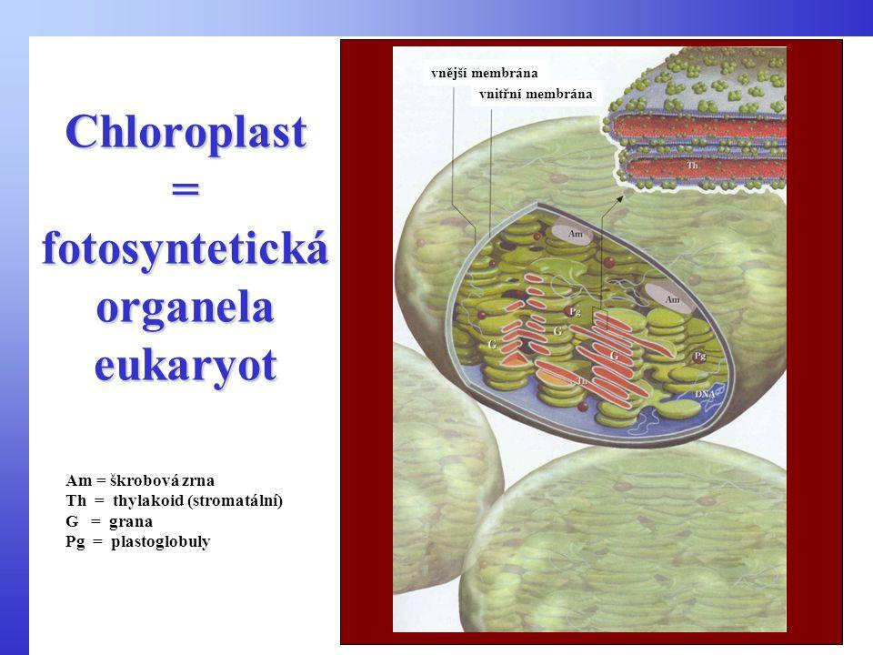 Chloroplast = fotosyntetická organela eukaryot