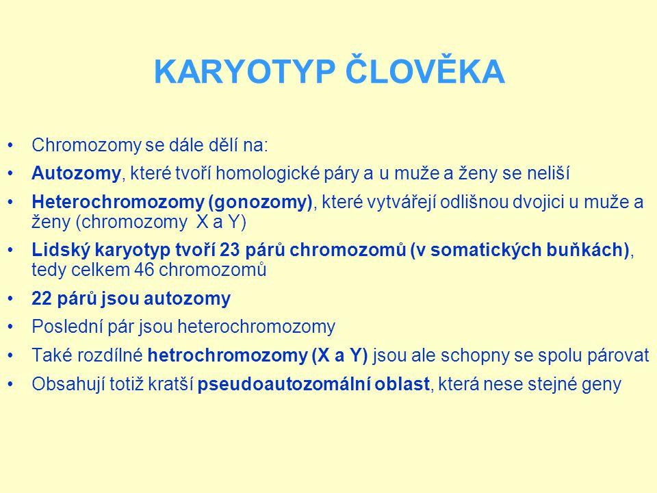 KARYOTYP ČLOVĚKA Chromozomy se dále dělí na: