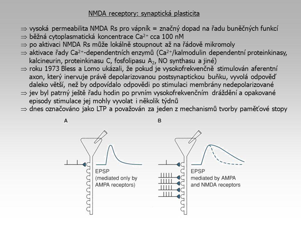 NMDA receptory: synaptická plasticita