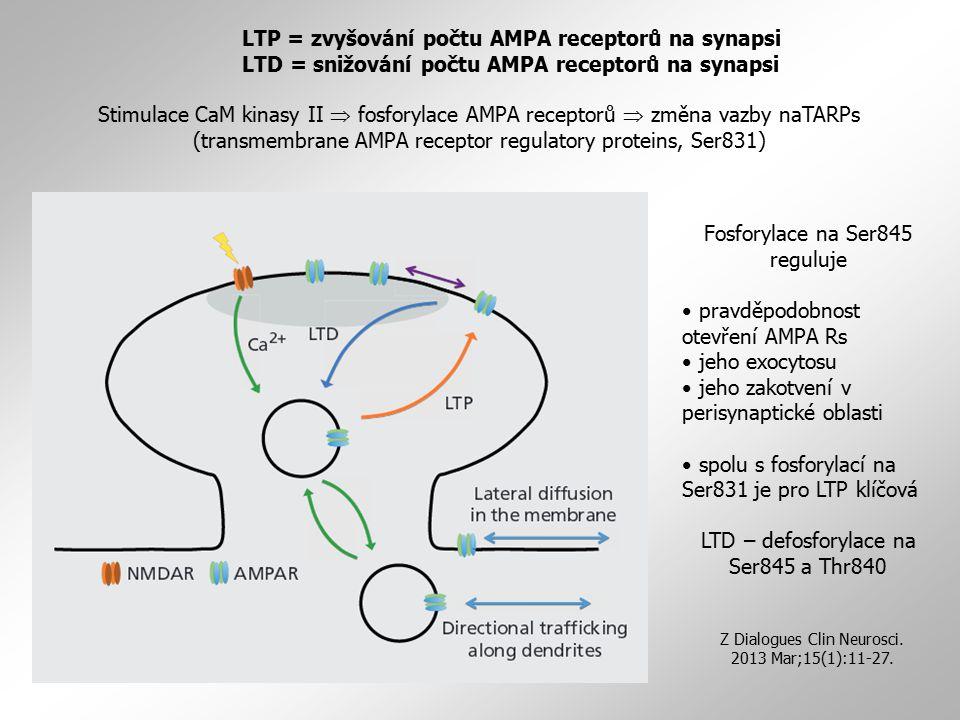 LTP = zvyšování počtu AMPA receptorů na synapsi