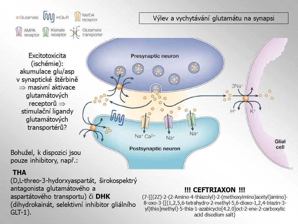 Výlev a vychytávání glutamátu na synapsi