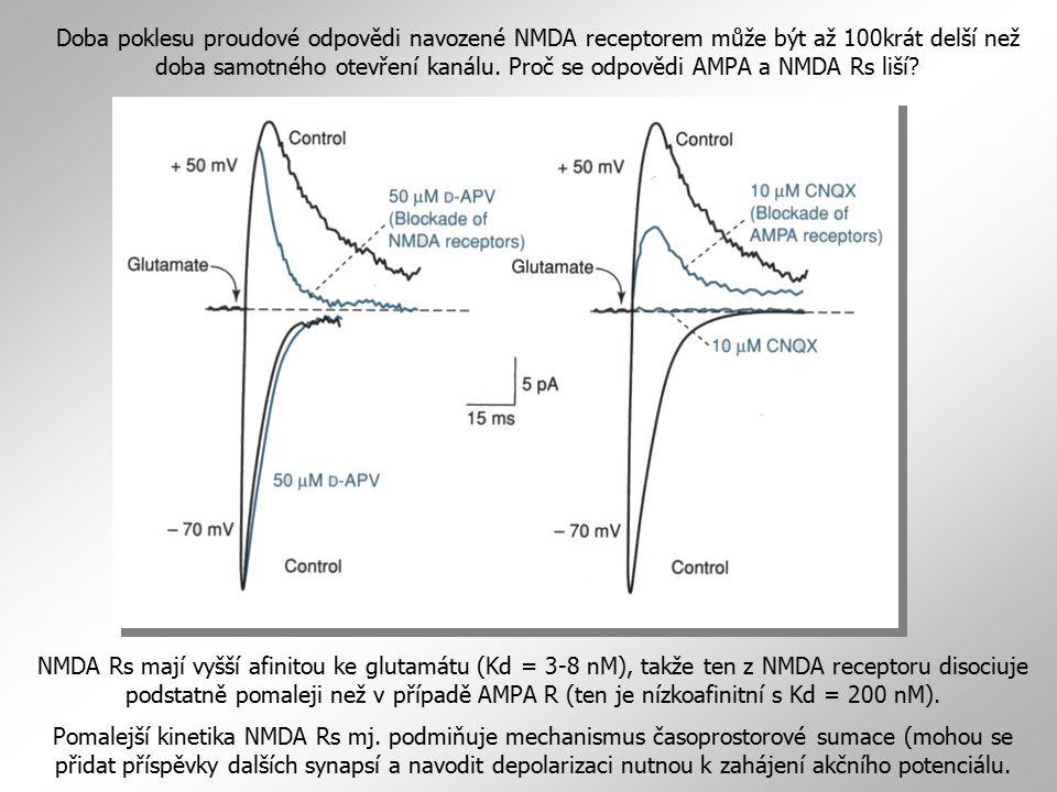 Doba poklesu proudové odpovědi navozené NMDA receptorem může být až 100krát delší než doba samotného otevření kanálu. Proč se odpovědi AMPA a NMDA Rs liší