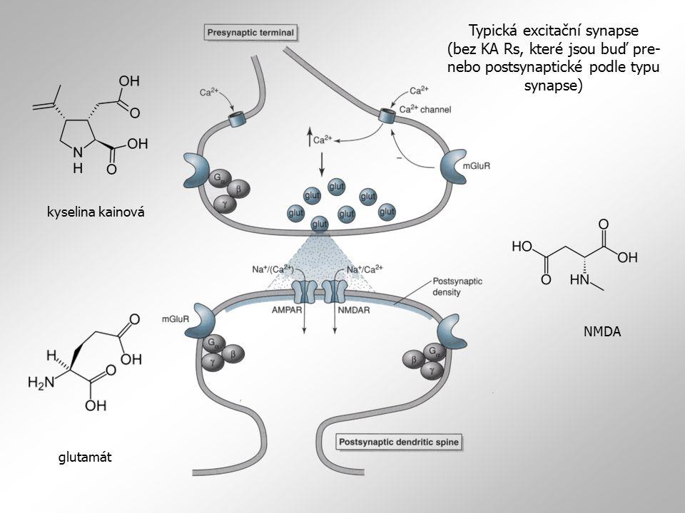 Typická excitační synapse
