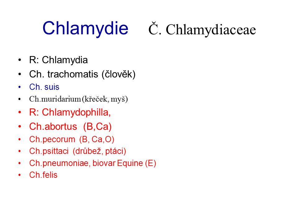 Chlamydie Č. Chlamydiaceae