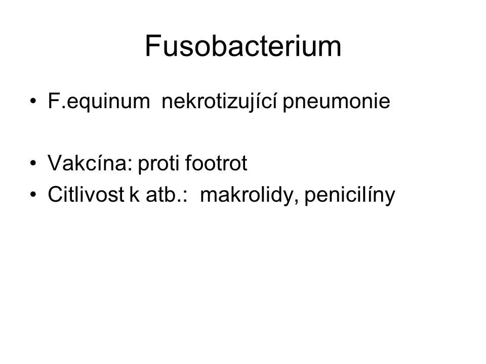 Fusobacterium F.equinum nekrotizující pneumonie Vakcína: proti footrot