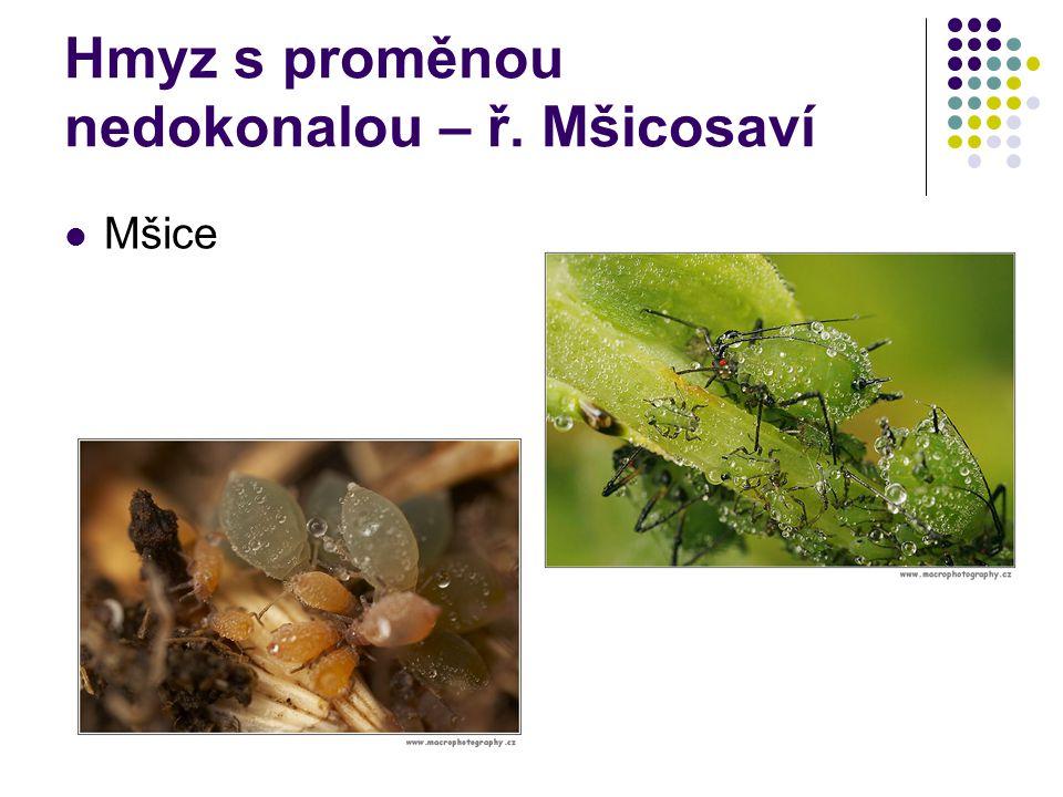 Hmyz s proměnou nedokonalou – ř. Mšicosaví